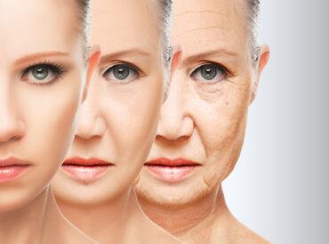 Innerhalb des Jahres werden im Körper etwa 3 Kilos Kollagen ausgetauscht. Alte Kollagenfasern werden durch neue Fasern ersetzt.